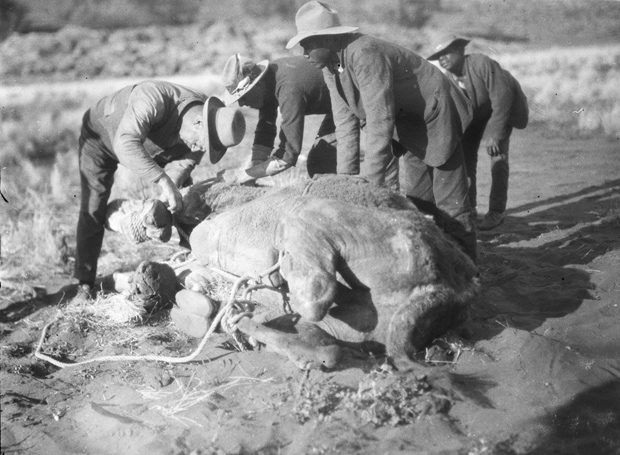 Herbert-Basedow-historical-aboriginal-images-196